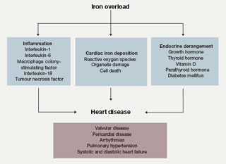 Figure 1. Heart disease in patients with thalassaemia: a multi-dimensional perspective