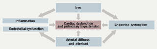 Figure 3. Cardiac dysfunction in thalassaemia is a systemic iron-overload inflammatory disease