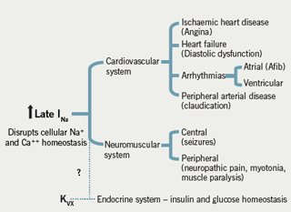 Figure 3: Potential pathological roles of late INa in cardiac and other diseases