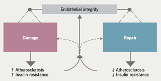 Figure 1: The balance between endothelial damage and repair