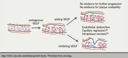 Figure 4. Impact of VEGF on atherosclerotic plaque development and stability