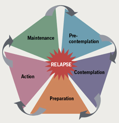 Figure 1. The five stages of the transtheoretical model (adapted from ref. 8)