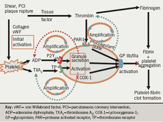 Figure 1. Central role of platelets and interaction with coagulation in the genesis of thrombosis (1)