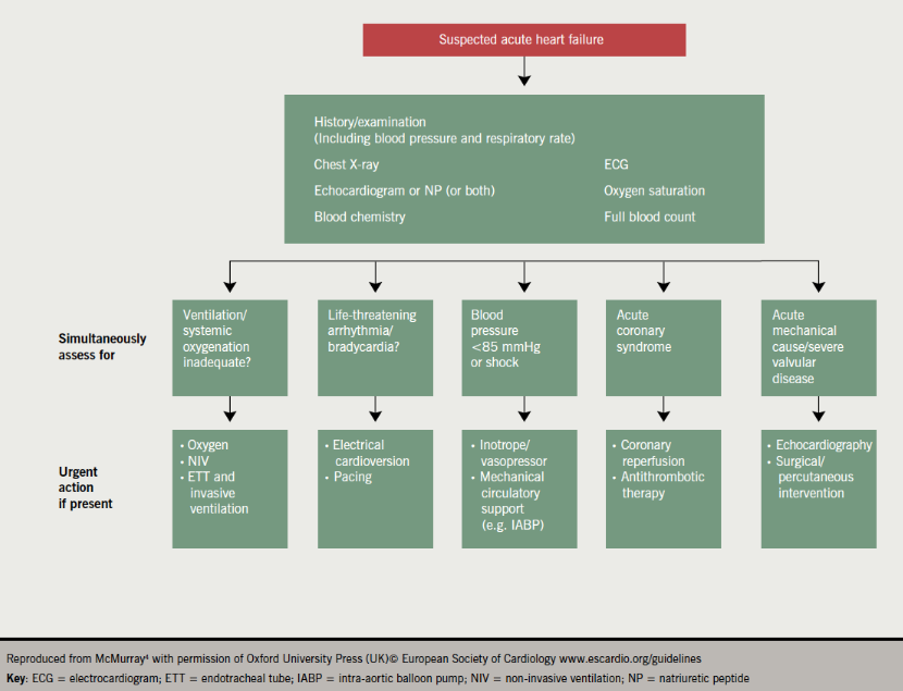 Figure 2. Initial assessment of patient with suspected acute heart failure