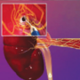 What's hot in cardiorenal medicine