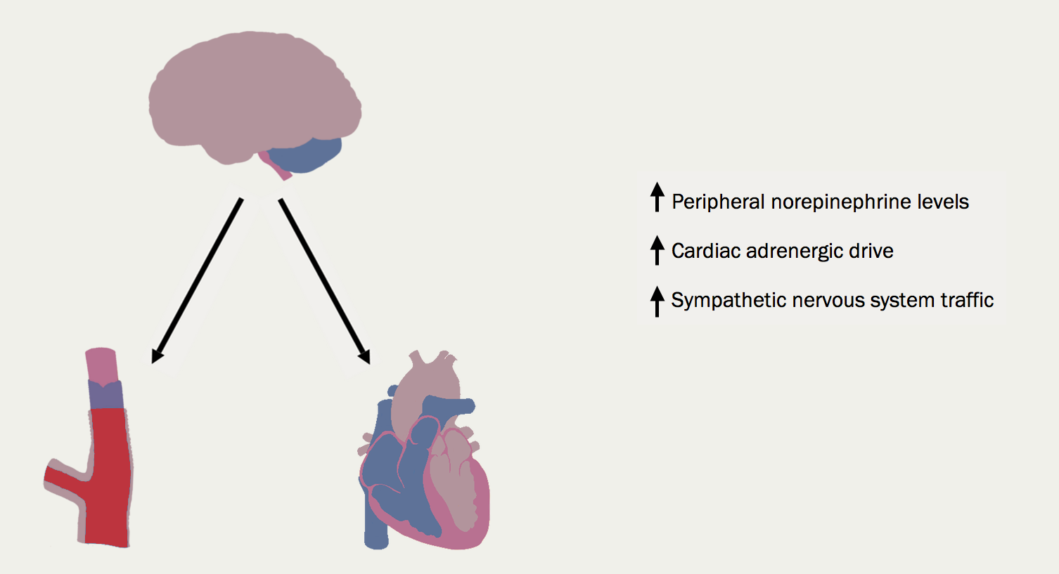 Figure 14. Overactivity of sympathetic nervous system