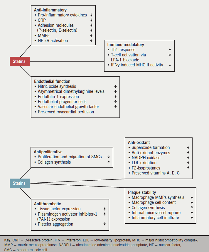 Figure 1. The major pleiotropic effects of statins