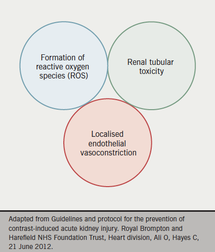 Figure 1. Aetiology of contrast-induced nephropathy