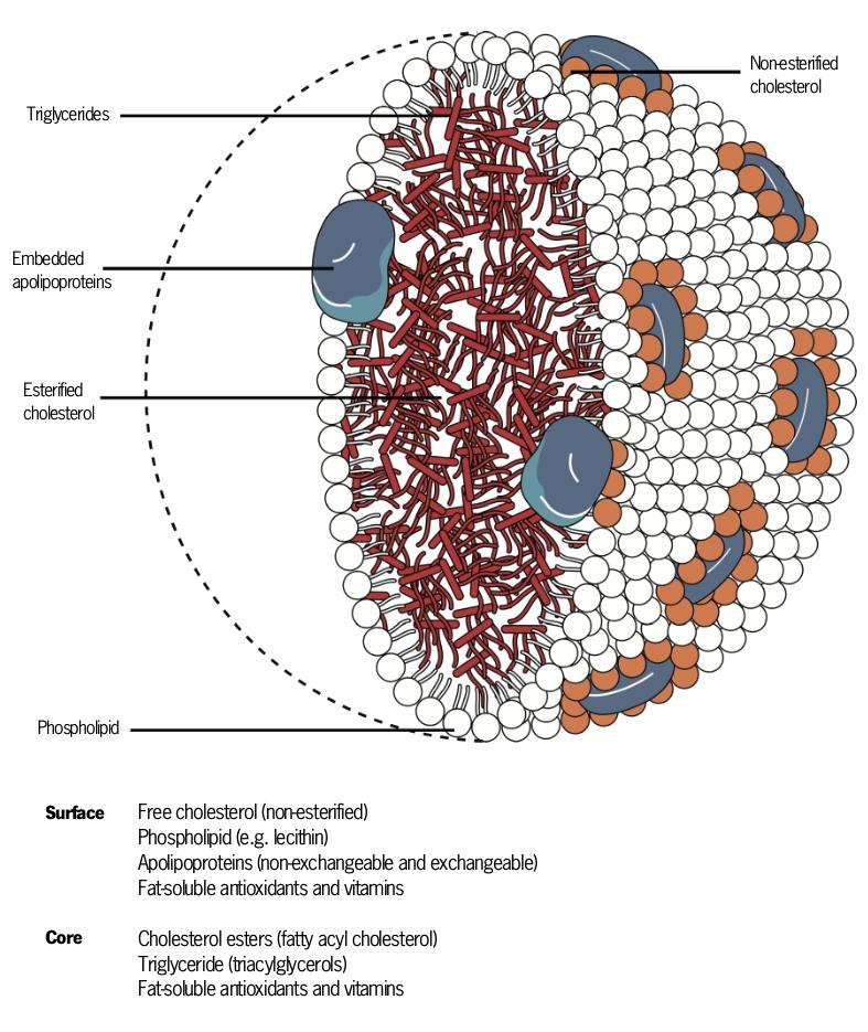 Figure 1 online