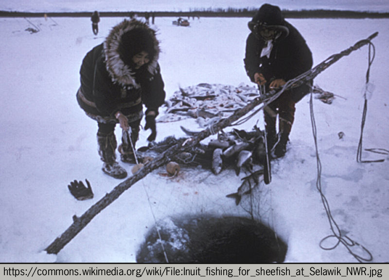 Figure 9. The Inuit people have low heart disease rates