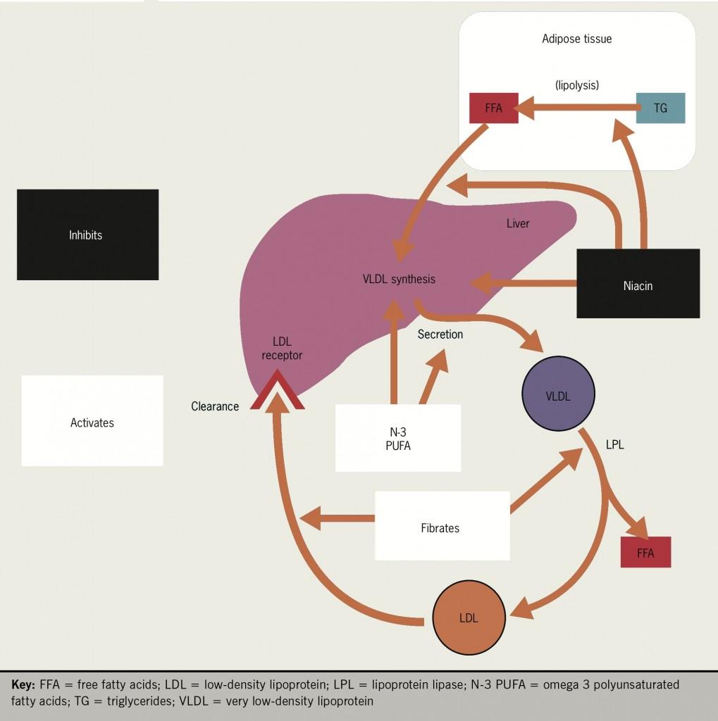 Figure 7. Mode of action of nicotinic acid (niacin)