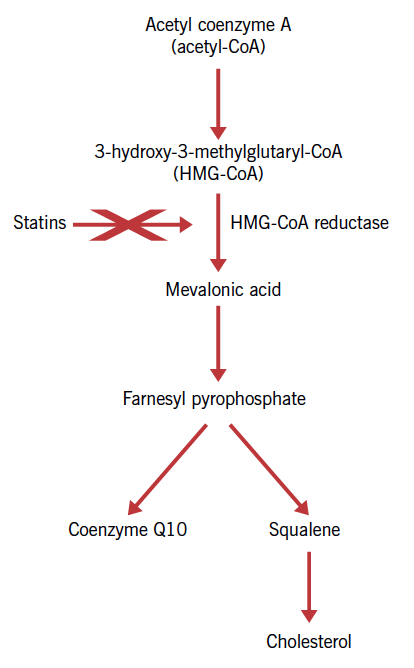 Figure 3. Synthetic pathway for coenzyme Q10