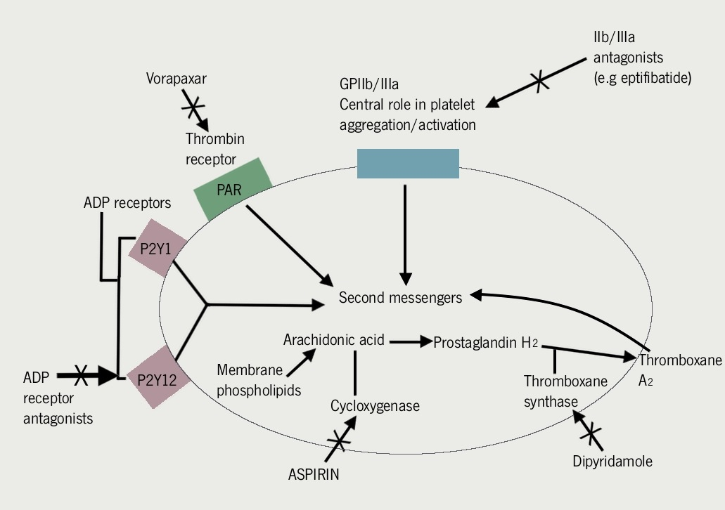 Figure 1. Mechanism of action for aspirin