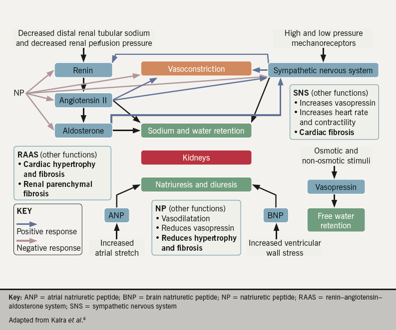 raas diagram free