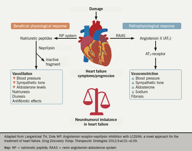 Figure 3. Heart failure is a state of neurohumoral imbalance