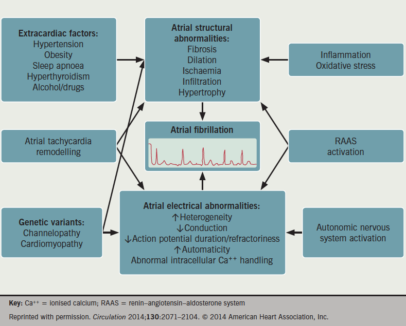 Figure 1. Mechanisms of atrial fibrillation