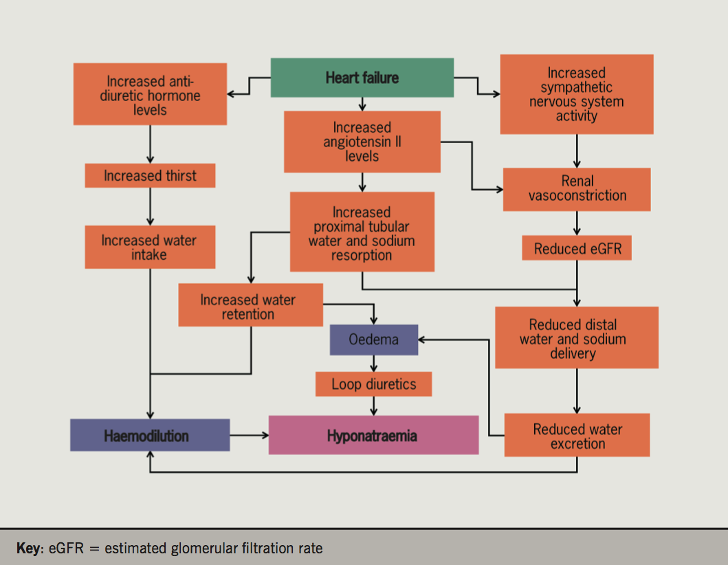 Figure 1. Mechanisms for developing hyponatraemia in heart failure