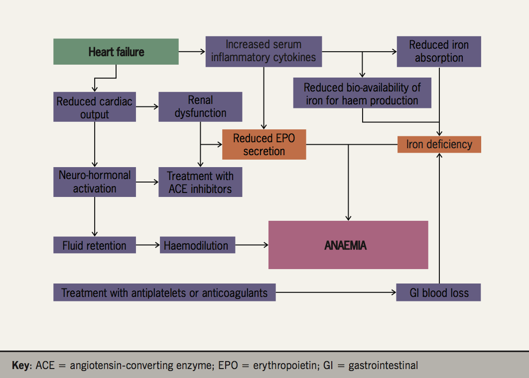 Figure 7. Causes of anaemia in patients with heart failure
