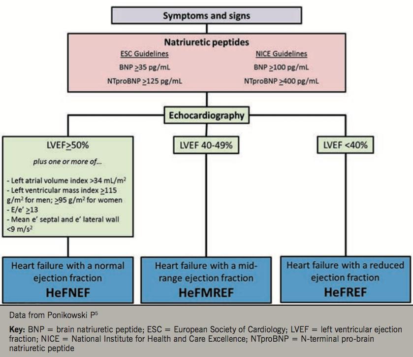 Heart failure learning module 2 - Figure 2. Diagnostic algorithm for heart failure