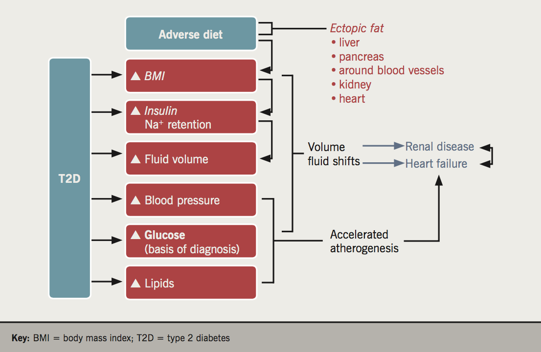 Sattar - Figure 2. While multiple risk factors come together to enhance vascular risk in diabetes, more attention should be given to the abnormal fluid status (volume overload) in type 2 diabetes as a contributing factor in some of its complications, perhaps particularly renal and heart failure. In this way, some risk factors may act more to promote atherogenesis, whereas other risk factors linked to haemodynamic and volume overload pathways may more strongly promote renal dysfunction and linked heart failure risks. Furthermore, the extent to which excess fat and its location in type 2 diabetes plays a role in some of these risk factor pathways, including excess volume status, requires further study