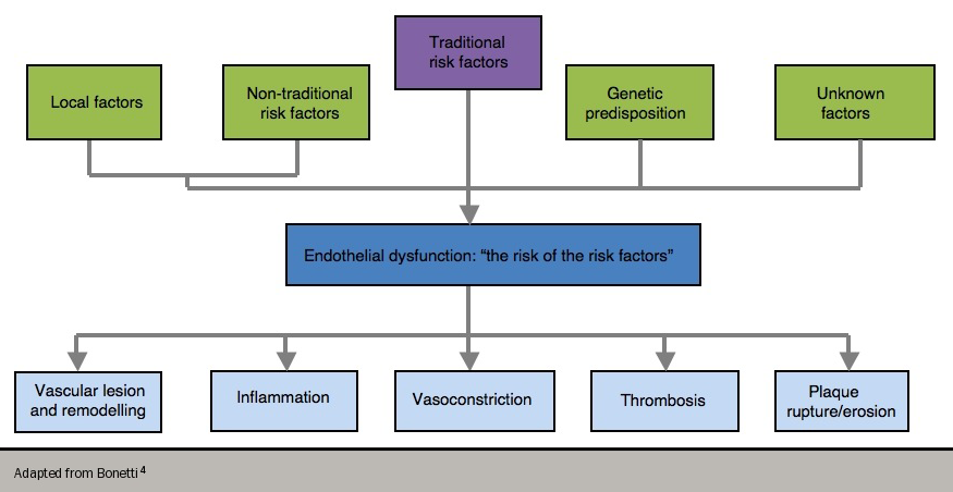Angina module 3 - Figure 2. Endothelial dysfunction – risk of risk factors