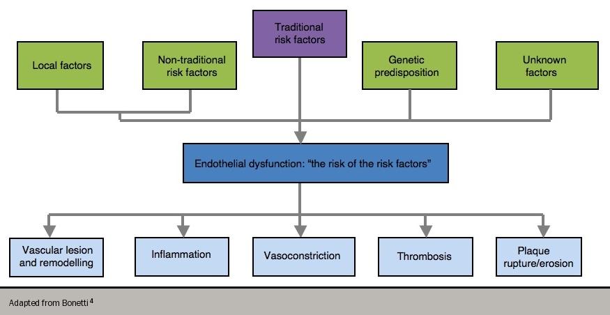 Angina module 3 - Figure 2. Endothelial dysfunction – risk of risk factors