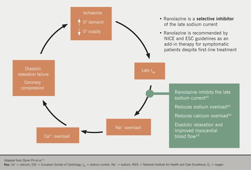 Angina Module 6. Figure 8.  Mode of action for ranolazine showing how it improves myocardial (diastolic) relaxation