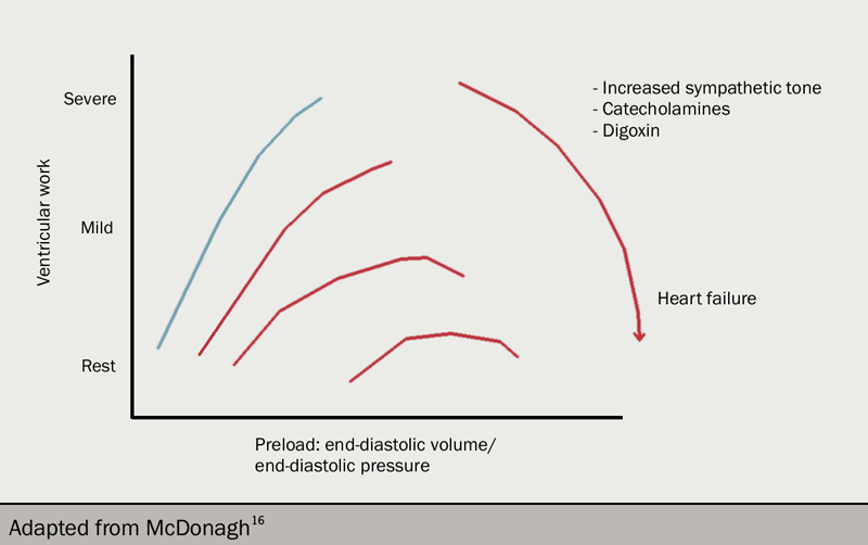 Figure 5. Digoxin has a positive inotropic effect increasing the contractility of the myocytes resulting in a rise in intracellular sodium