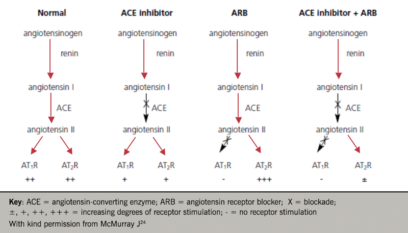 Heart failure module 3 - Figure 2. Effects of ACE inhibition and angiotensin II type I receptor blockade on angiotensin receptor stimulation (click to enlarge)