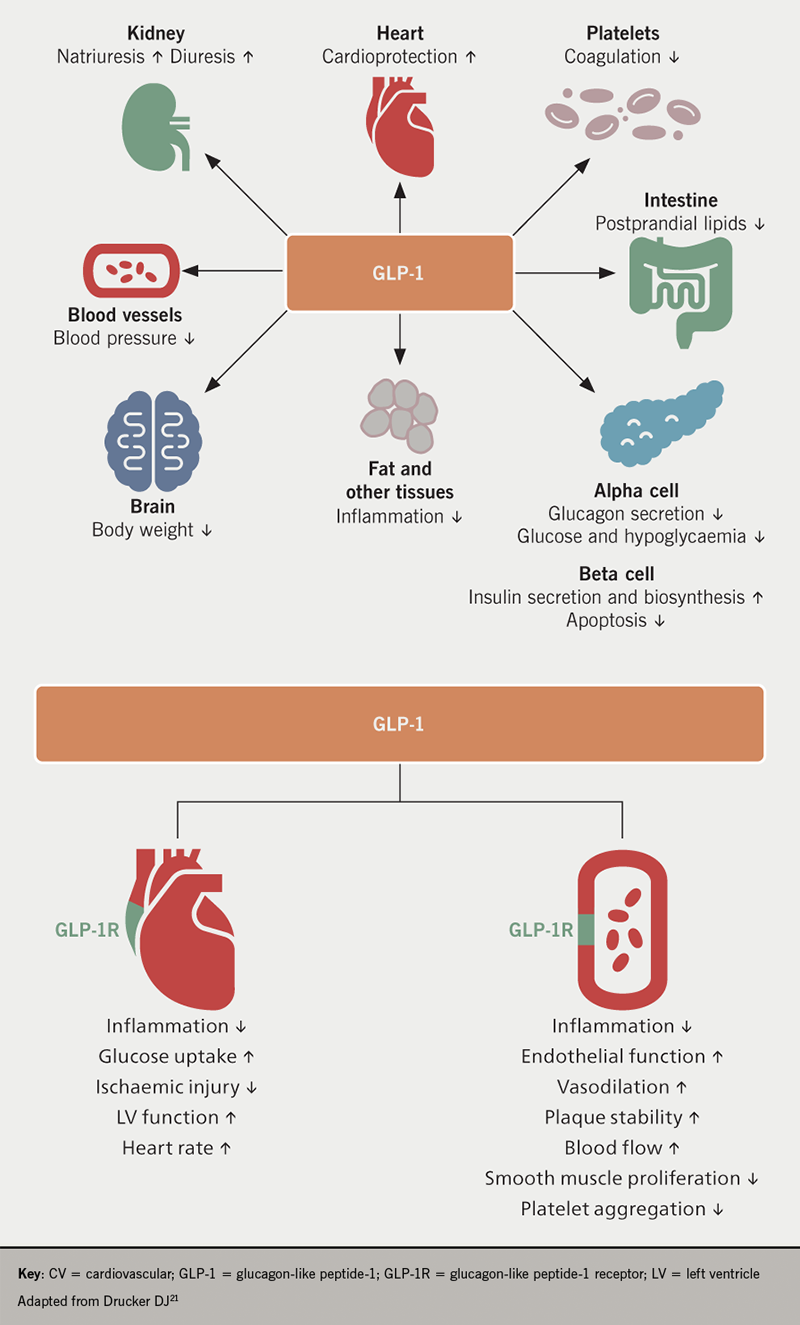Diabetes module 3 - Figure 1. Potential mechanisms involved in cardiovascular risk reduction with GLP-1 receptor agonists