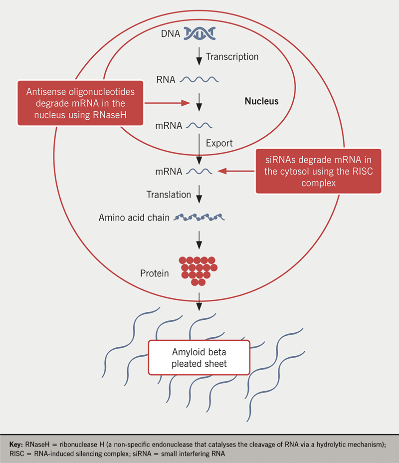 Amyloid management 2 - Figure 1. Sites of action of RNA-targeted approaches, including antisense oligonucleotide  and small interfering RNA therapies, in the management of transthyretin amyloidosis