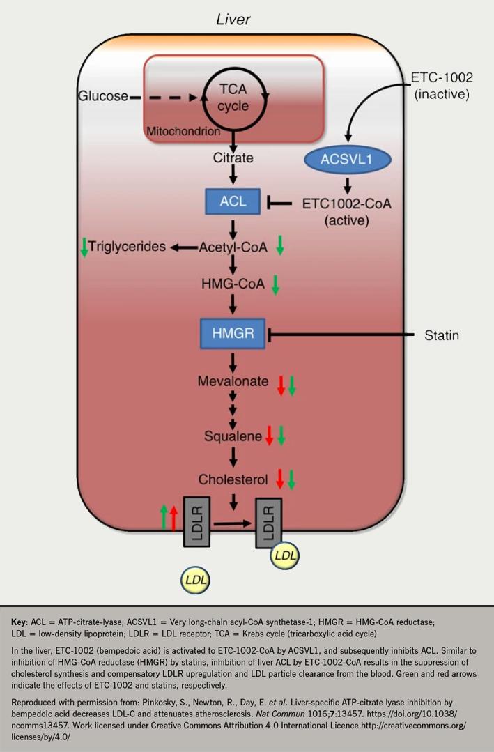 Lipids module 4 - Figure 10. The mode of action of bempedoic acid (ETC-1002)