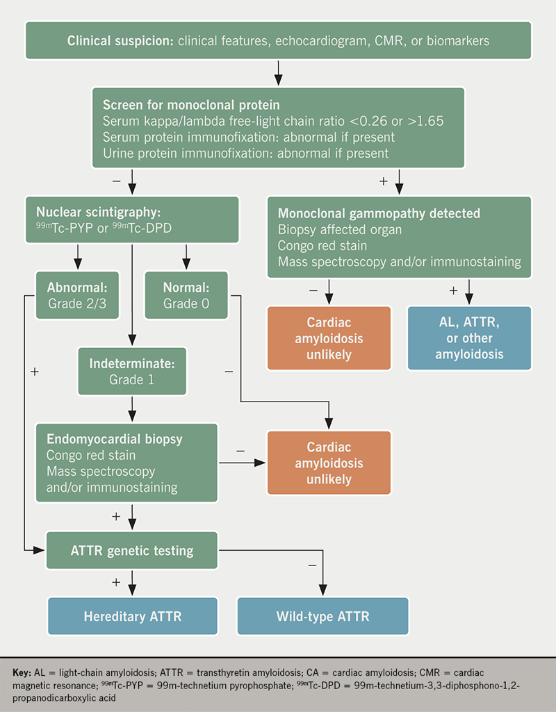 Krepp Amyloid diagnosis - Figure 4. Diagnostic algorithm for evaluation of ATTR-CA