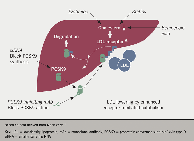 Inclisiran supplement article 2: Figure 2. Mode of action of LDL-lowering agents
